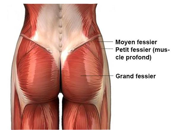 docteur-claude-le-louarn-anatomie-des-fesses